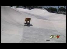 [Video] The Bulldog Skateboarder – Amazing!